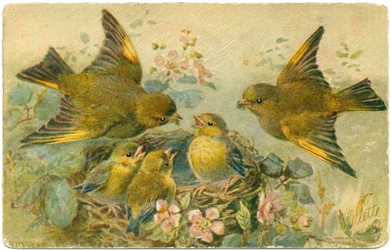 Birds tuck oilette 001