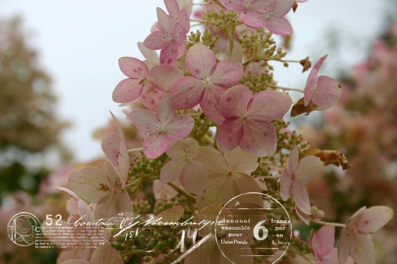 Cashiers highlands flowers2