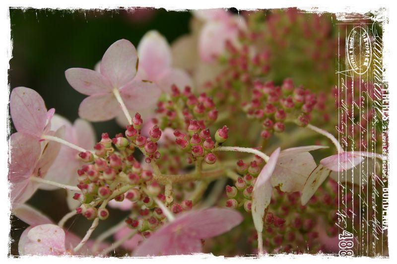 Cashiers highlands flowers3