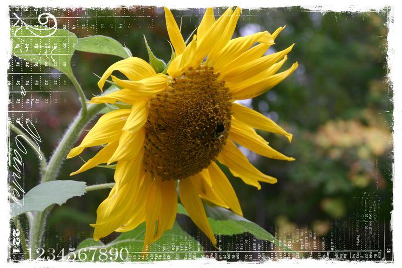 Cashiers highlands flowers4