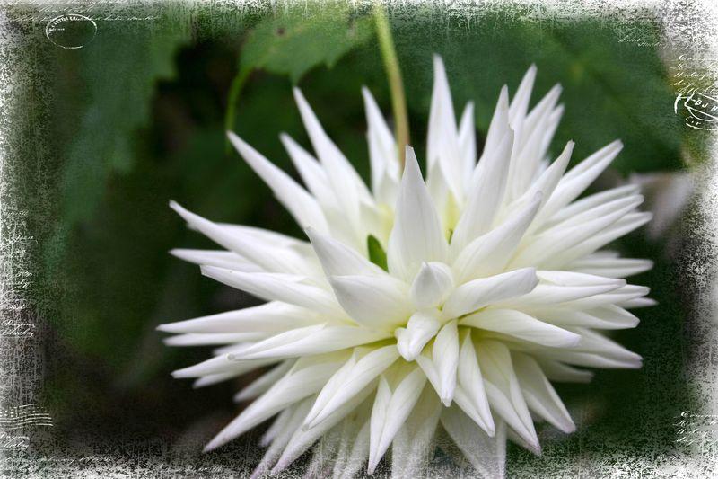 Cashiers highland flowers 11