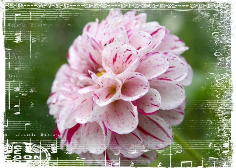 Cashiers highlands flowers8