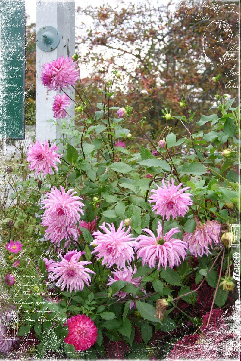 Cashiers highland flowers9