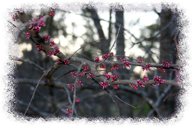 Late march backyard 036