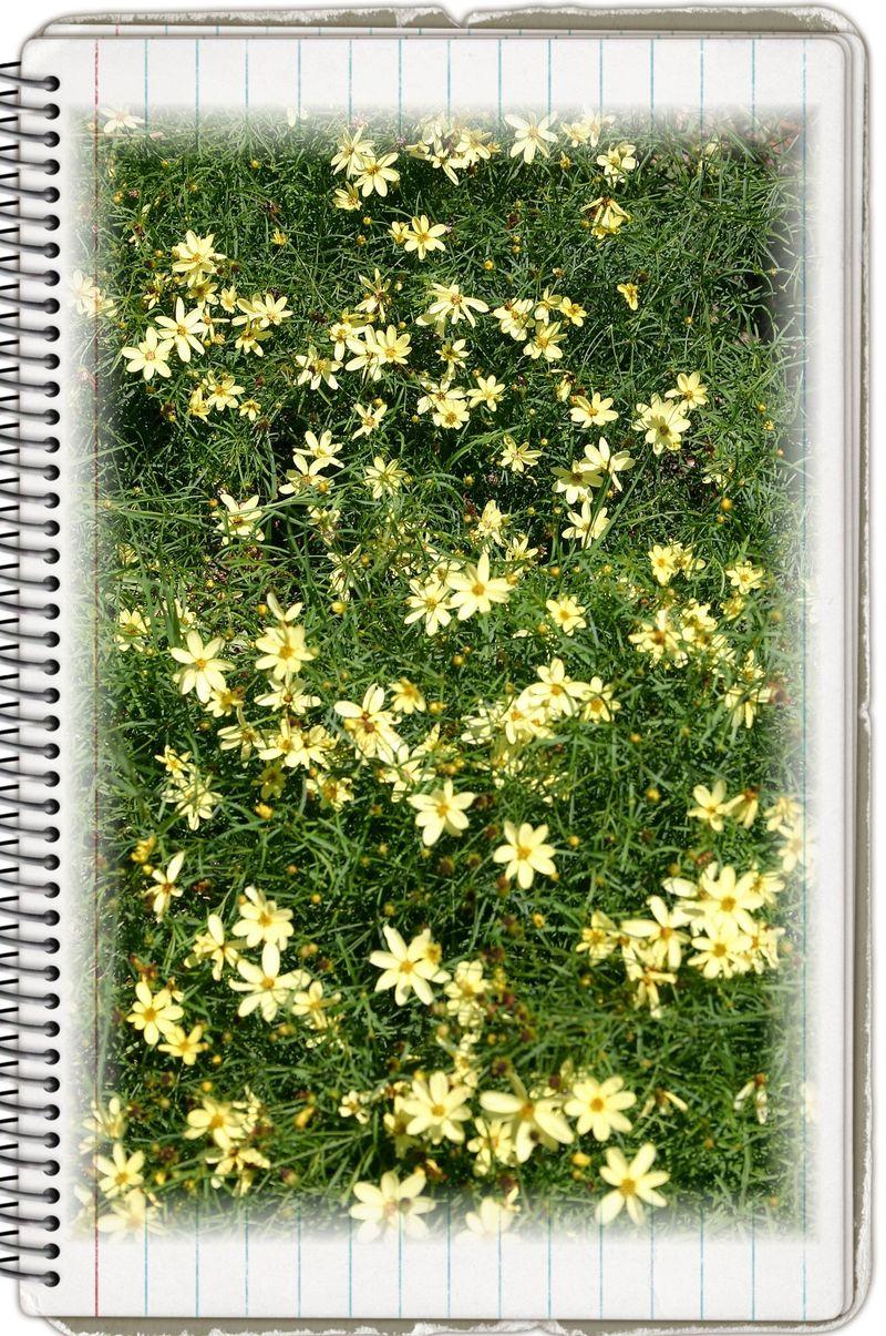 Copy of pressed flowers 142
