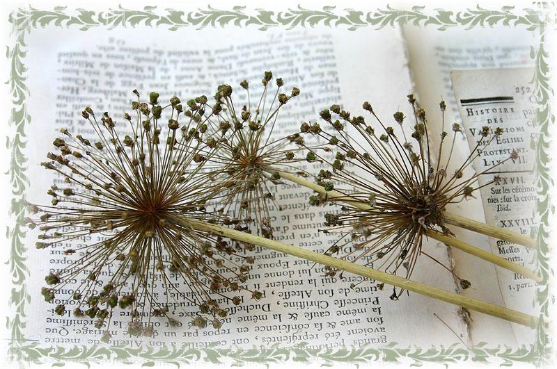 Copy of pressed flowers 196