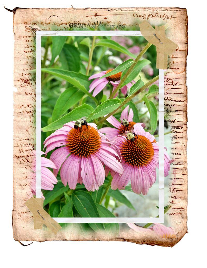 Copy of myartsdesiretypepad bees
