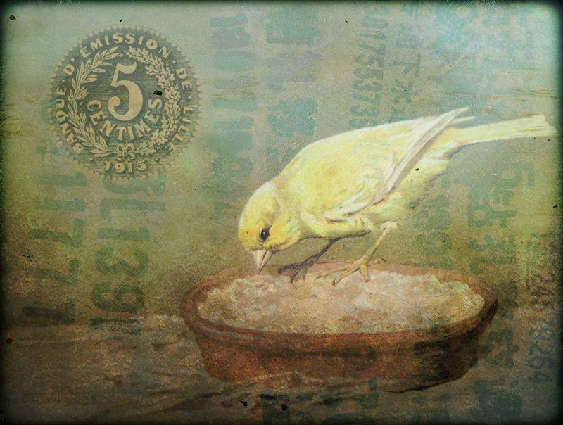 Copy of jpg bird