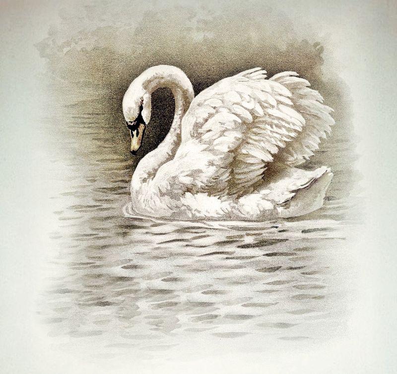 Myartsdesire.typepad.com swan