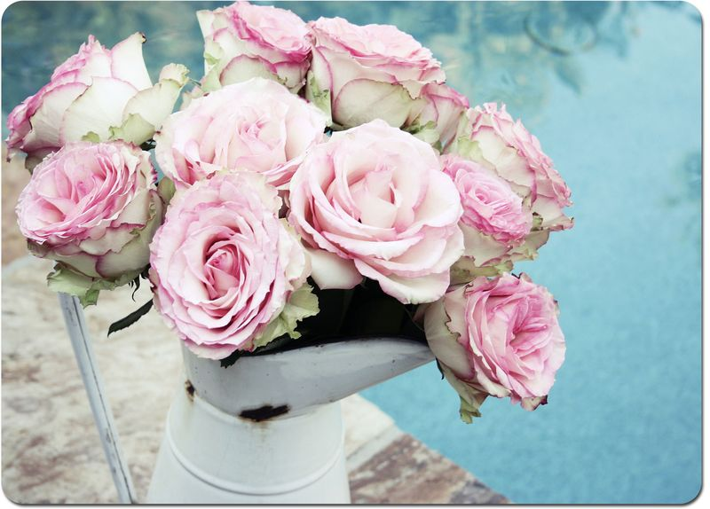 Pink-roses-102-copyweb