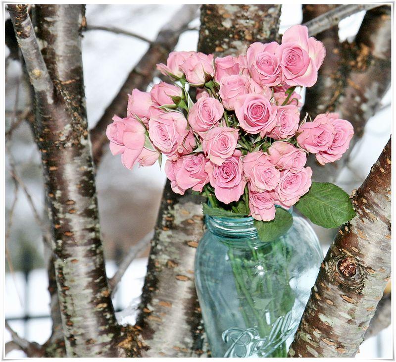 Winter roses 5