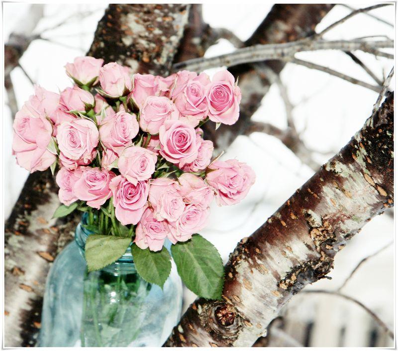 Winter roses 4
